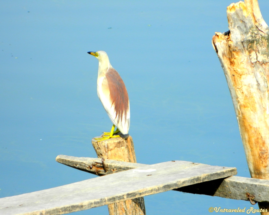Srinagar Bird Watching